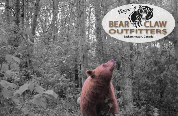 Bear up looking at Bear Claw
