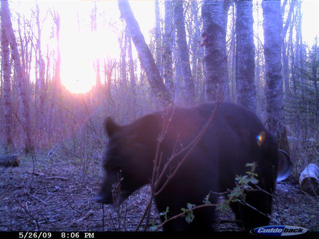 Big Bear and the sunrise