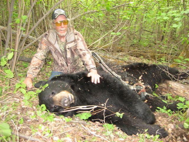 Nice bear 3